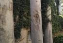 Las columnas de la calle Mármoles